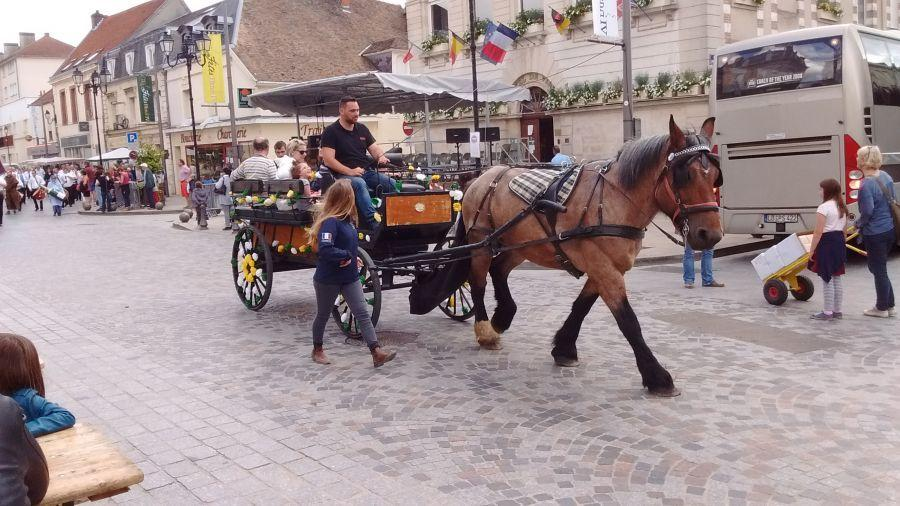 Horse-transport